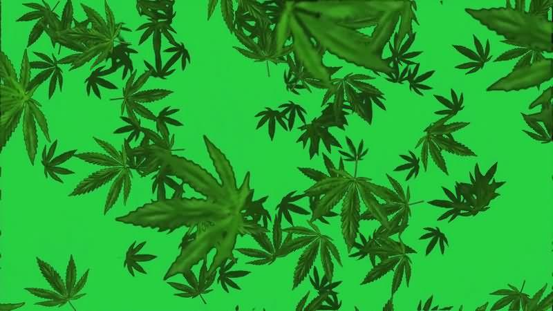 绿幕视频素材落叶