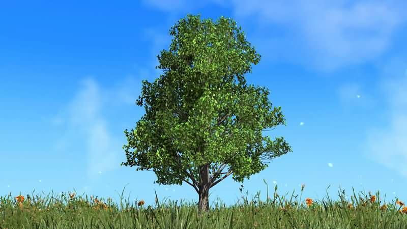 [4K]草地中一颗翠绿的大树视频素材