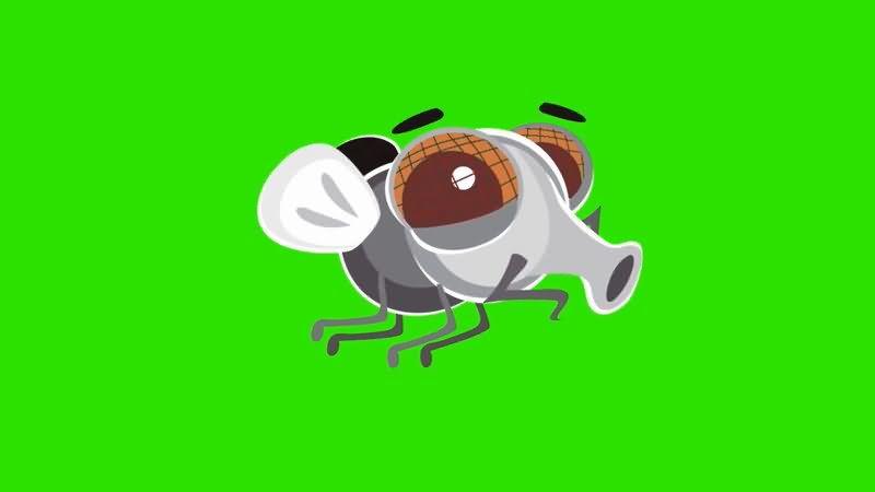 绿屏抠像卡通苍蝇视频素材