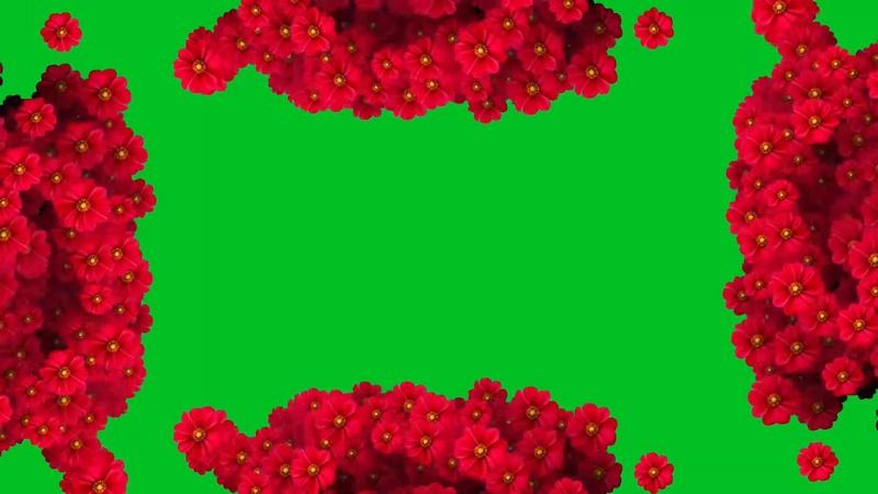 绿幕视频素材鲜花边框