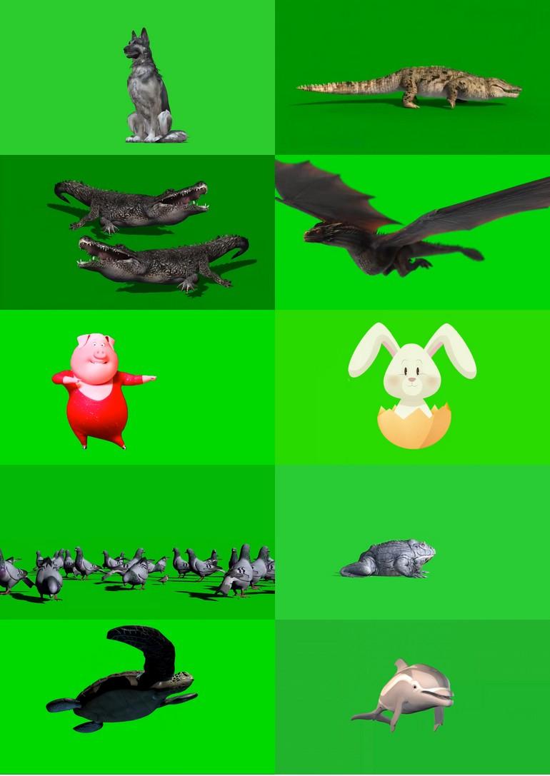 绿屏_绿布_绿幕动物|飞禽|走兽|鱼类|鸟类|生物视频素材打包100部第六套