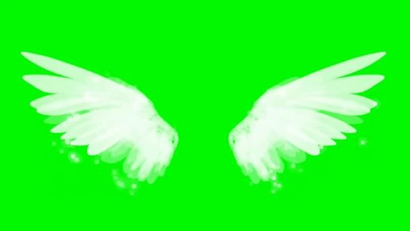 绿幕视频素材仙女翅膀