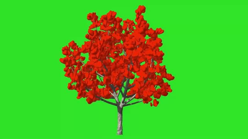 绿幕视频素材爱心树