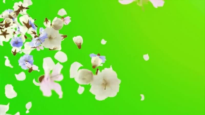 绿幕视频素材花朵