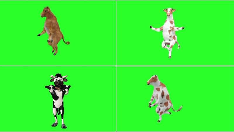 绿幕视频素材跳舞奶牛