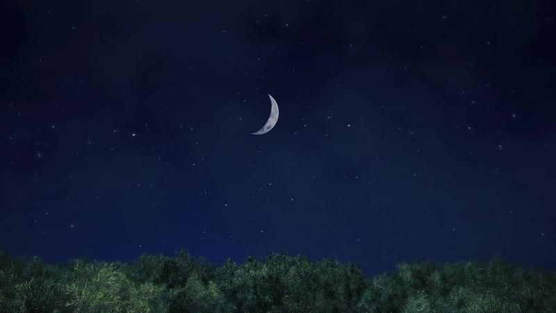 夜色下的树枝和星空里的月牙风景视频素材