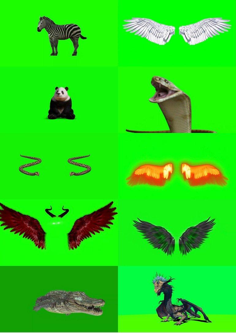 绿屏_绿布_绿幕动物|飞禽|走兽|鱼类|鸟类|生物视频素材打包100部第八套