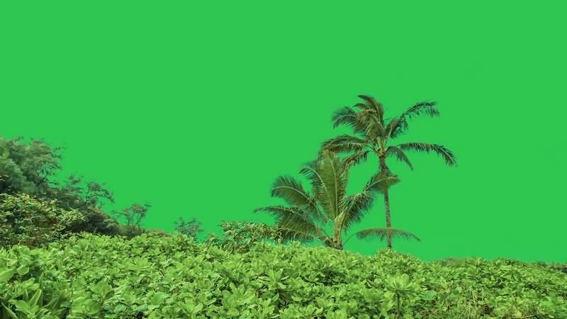 绿幕视频素材热带雨林
