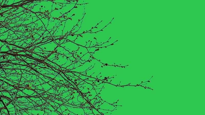绿幕视频素材树枝