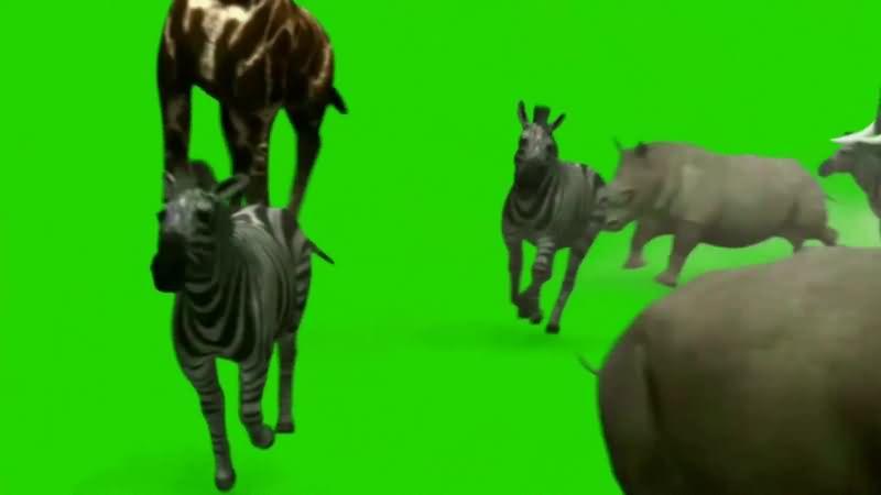 绿幕视频素材动物群